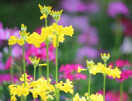 初夏を彩る花